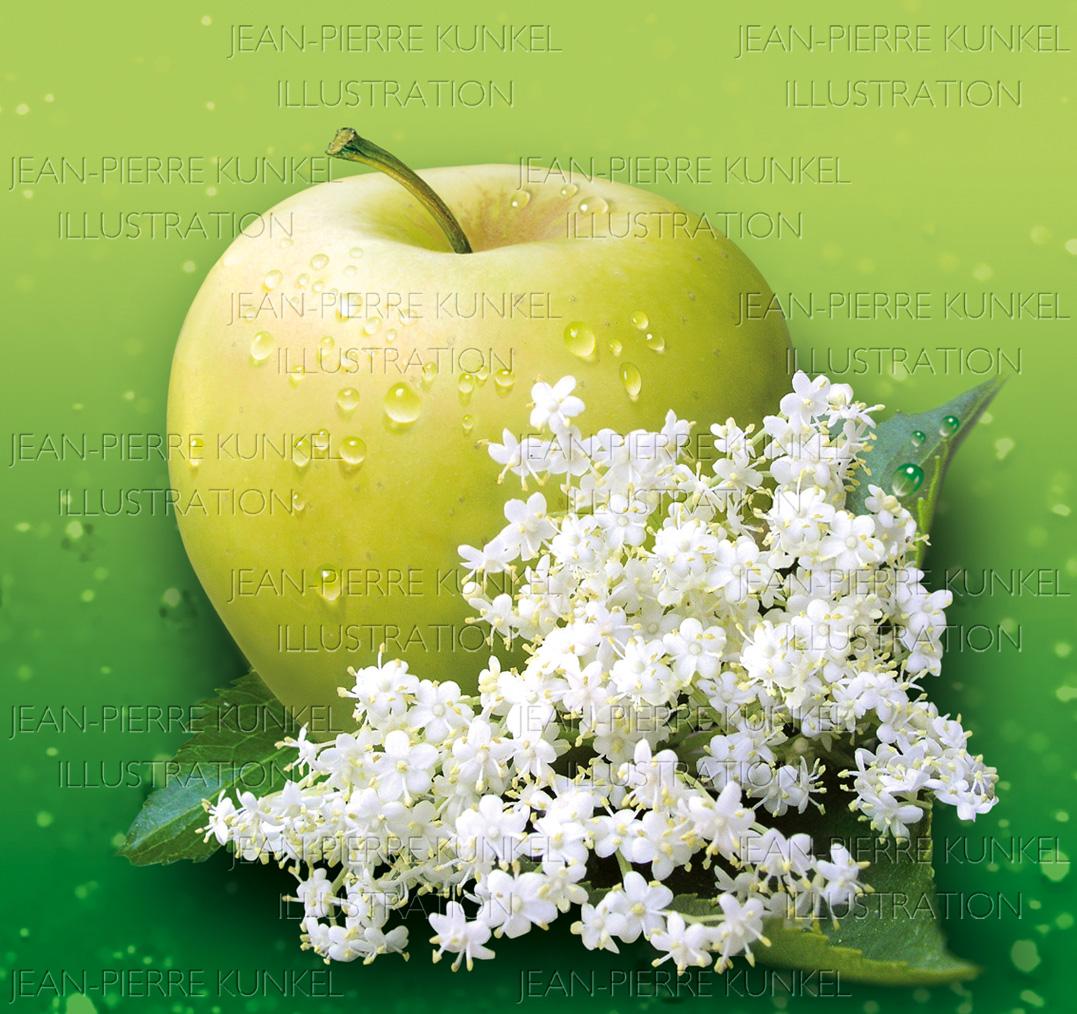 Apfel – Holunder