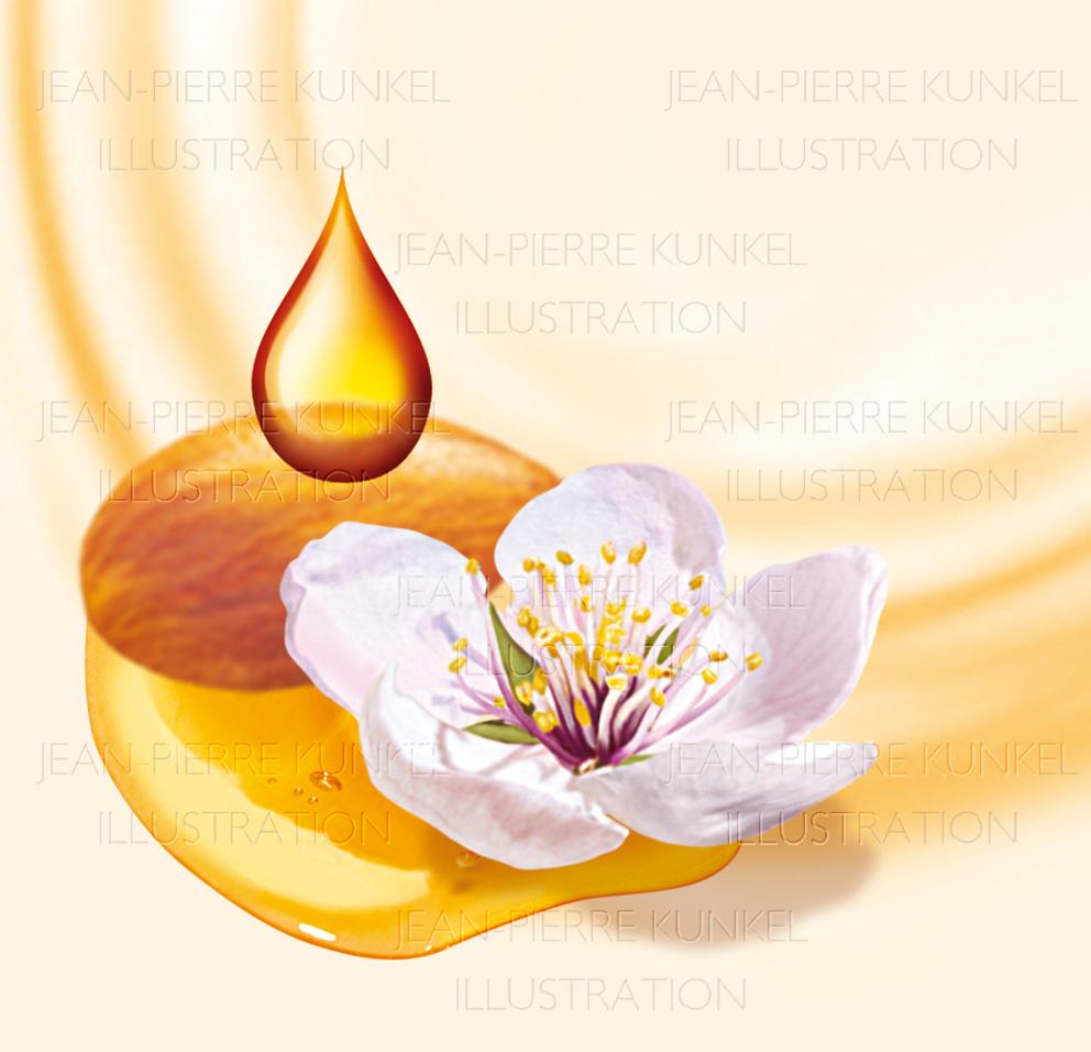 Mandelblüte/ Honig