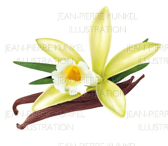 Vanillestangen und Blüte