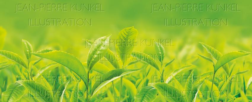 Teepflanzen