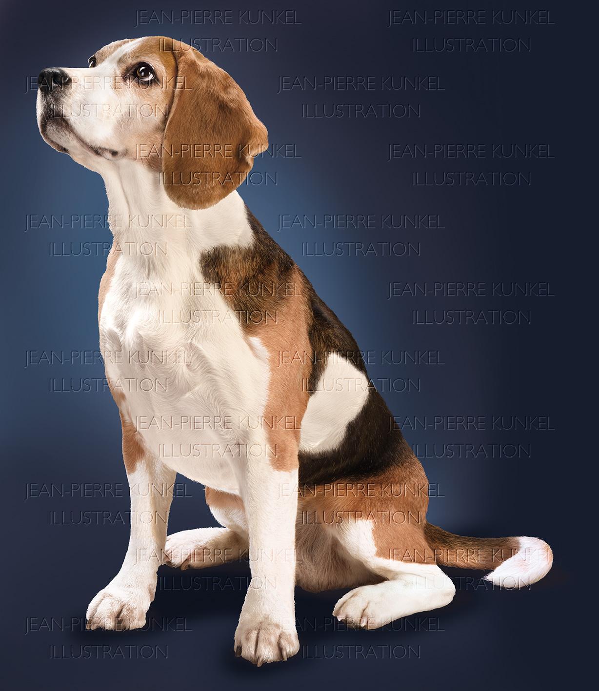 Hund 5