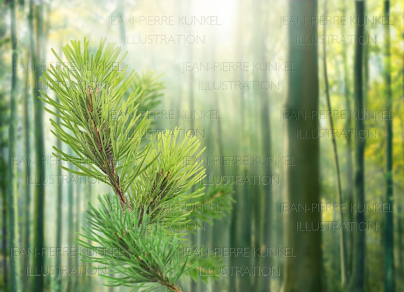 Wald Illustration