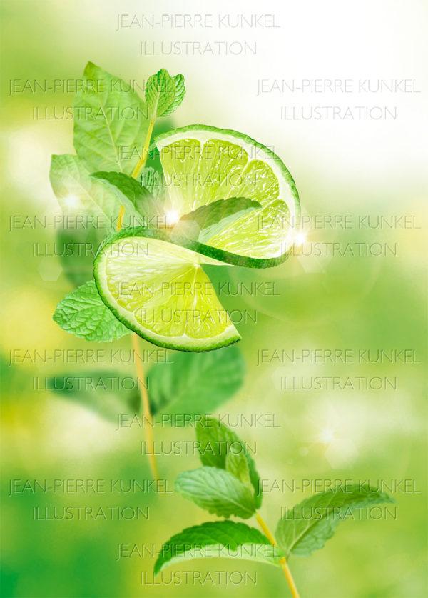 Citrus Illustration 1