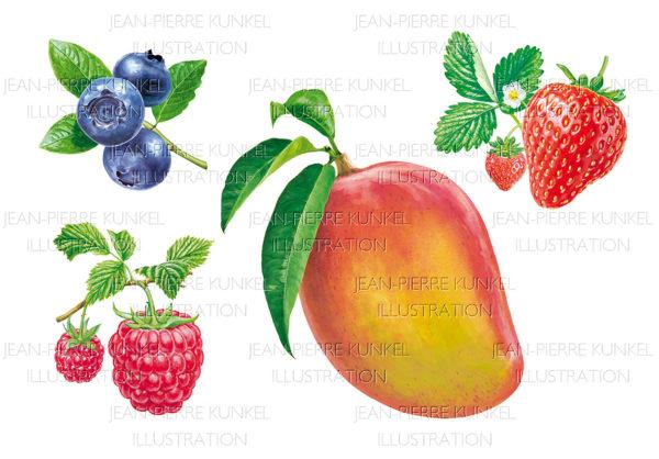 Früchte 5
