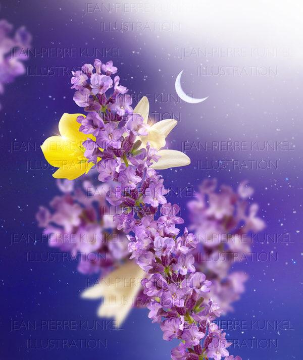 Lavendel-Vanille